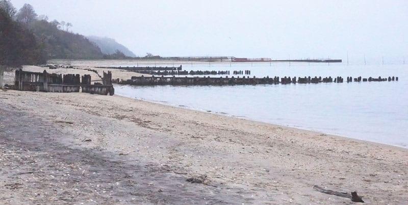 Albert's Landing Beach – Shells and Bygone Days