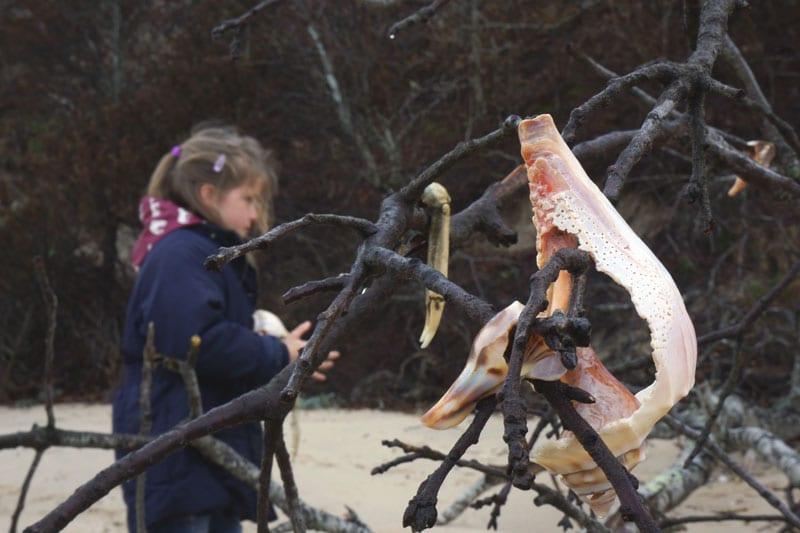Luce picking shells on tree