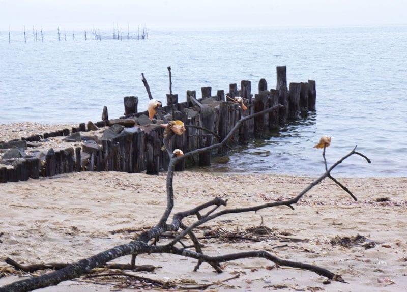 Alberts Landing beach Hamptons shell tree