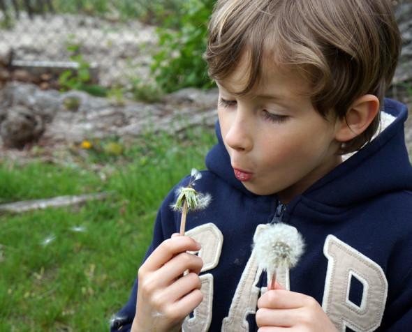 theo blowing dandelion