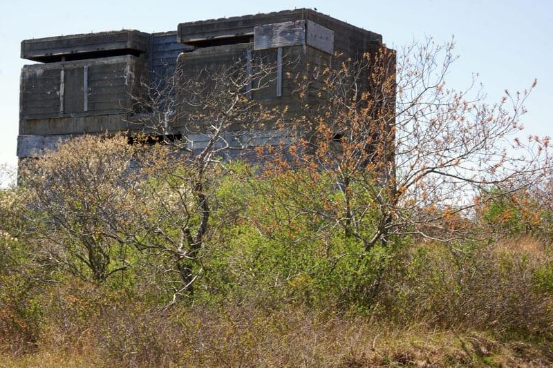 Shrubs in front of bunker