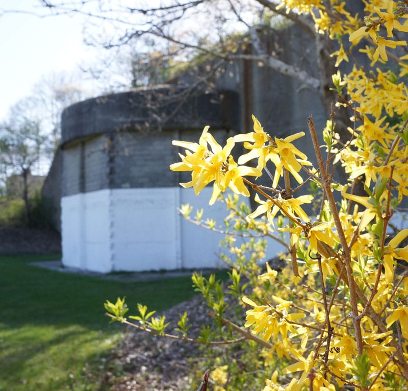 Battery 113 behind flowers