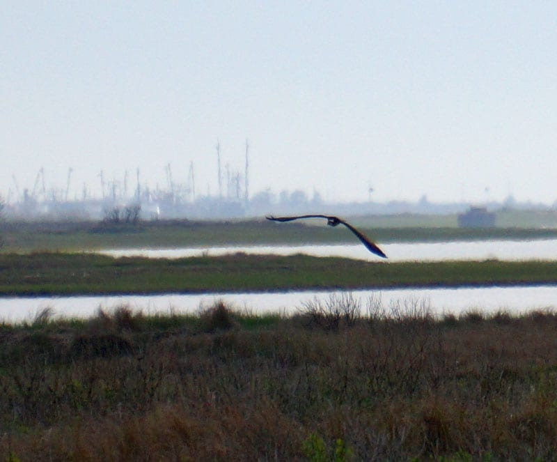 bird soaring sky Munn Point