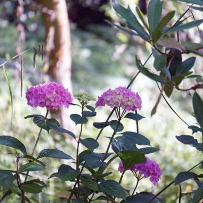 Natural beauty of an English garden