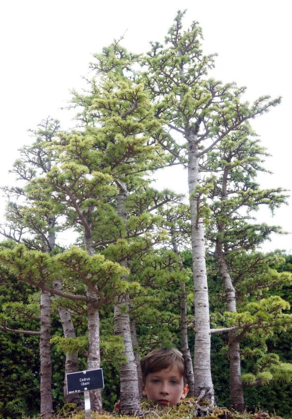 looking at the bonsai