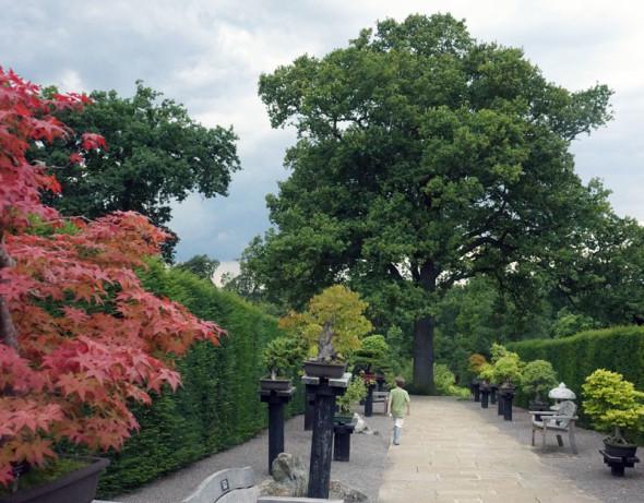 Bonsai lane RHS Garden Wisley