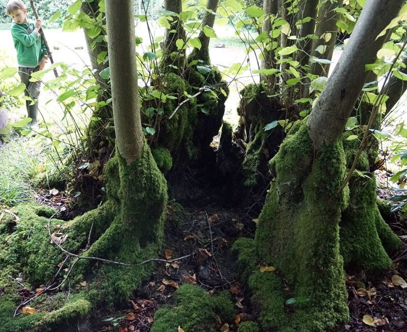 moss tree cluster