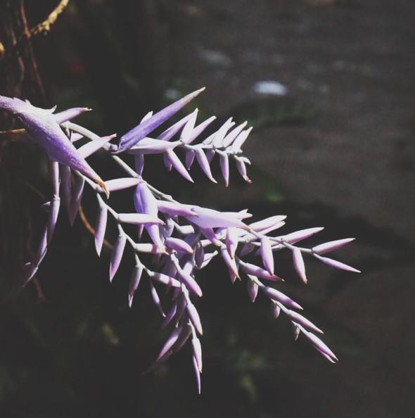 purple tropical flower