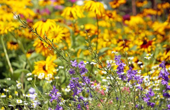 colorful flowers RHS Garden Wisley