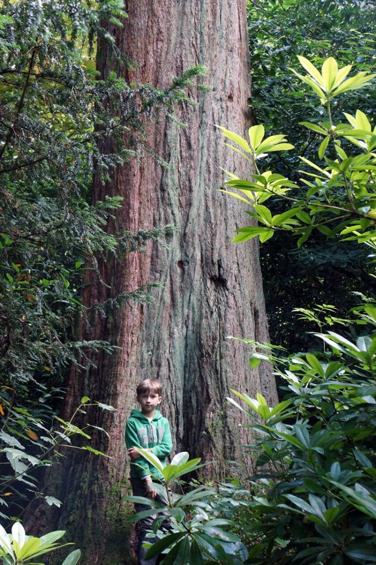 theo standing next to giant redwood