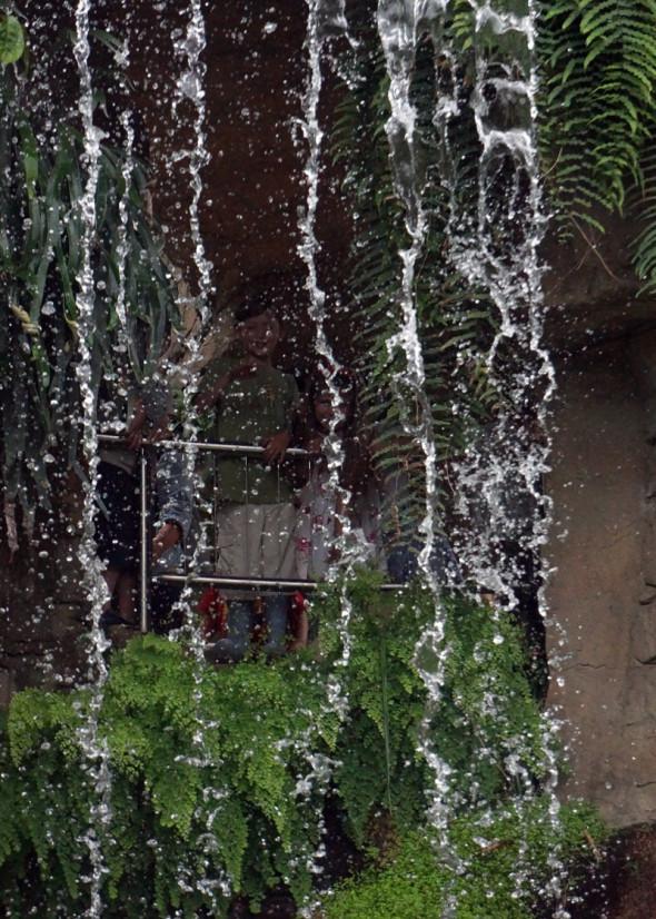 waterfall Glasshouse RHS Garden Wisley
