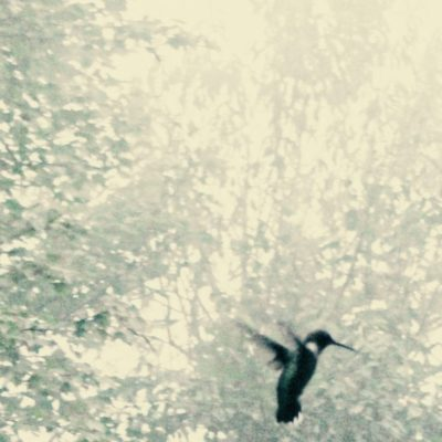 It's a Hummingbird's Life by Irene Kelly