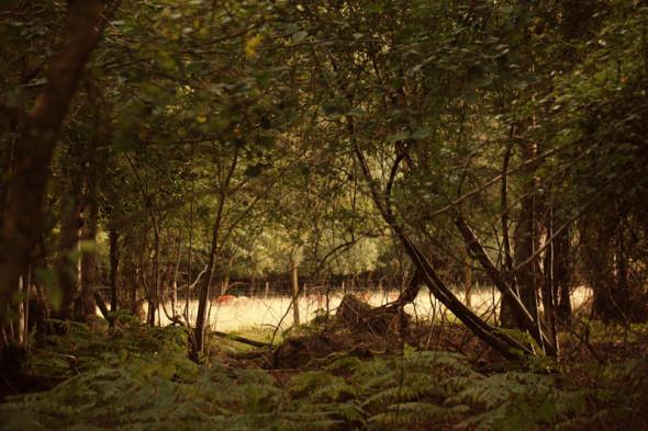 deer in field outside woods