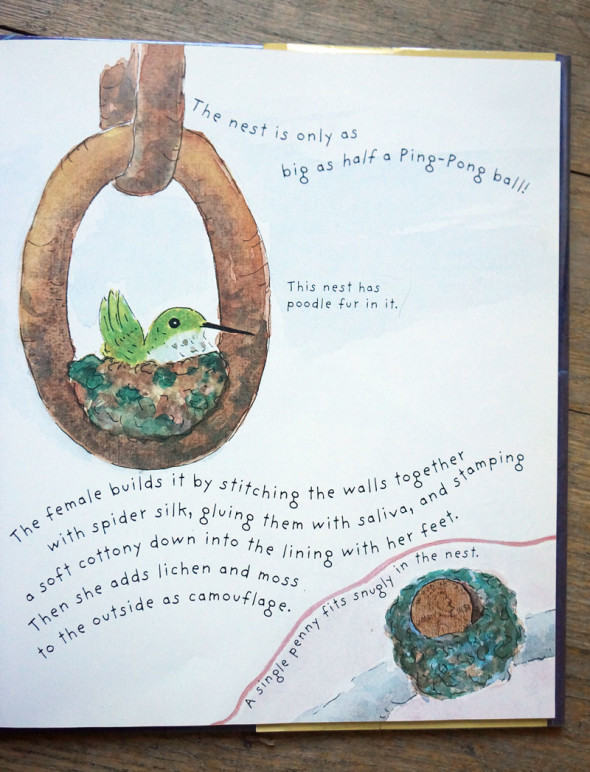Hummingbird childrens book page on nests