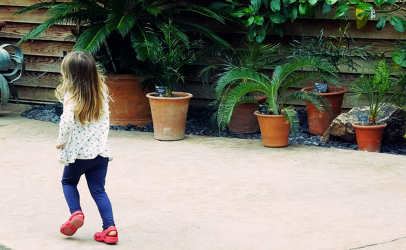 Pod running past potted plants