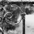 raindrops and spiderweb on gate BW