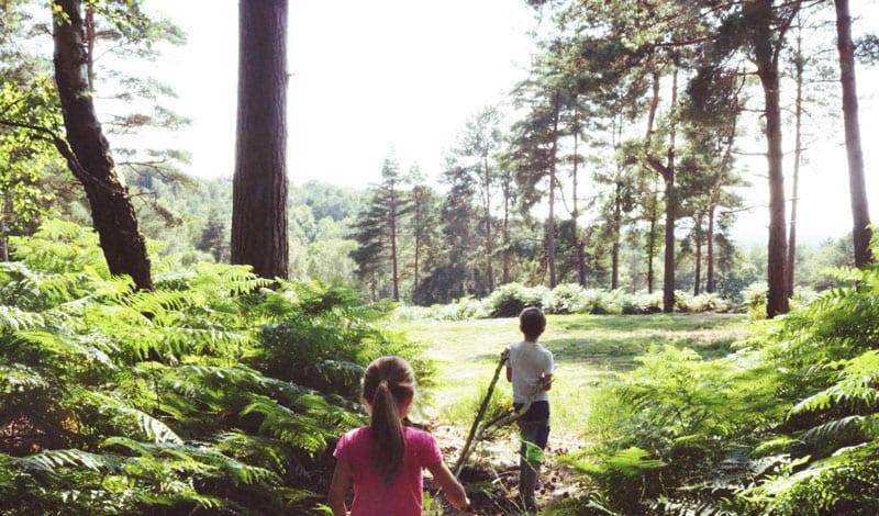 Hindleap walk Ashdown Forest