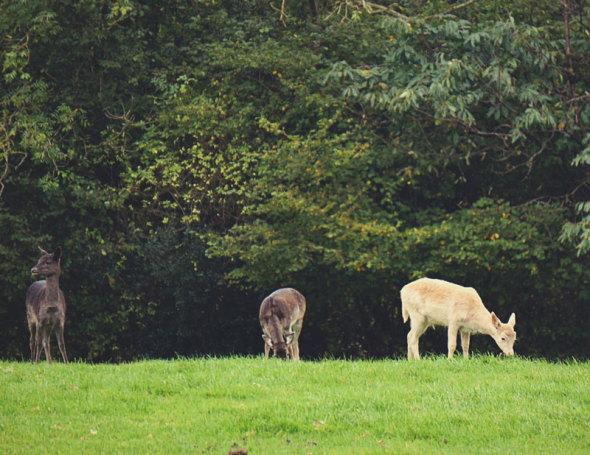 deer field
