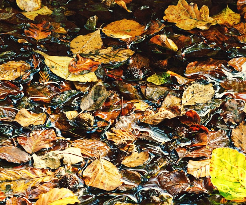 puddle filled with autumn leaves