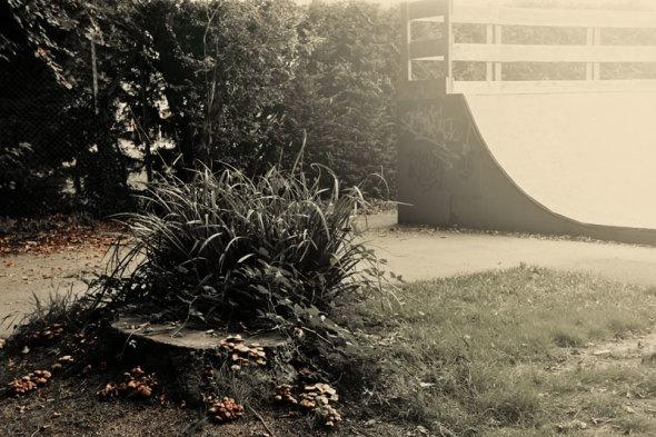 mushrooms and skateboard park