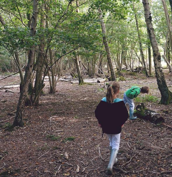 kids mushrooms tree trunk