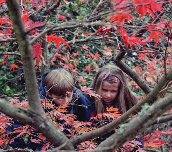 Twins climbing Japanese maple
