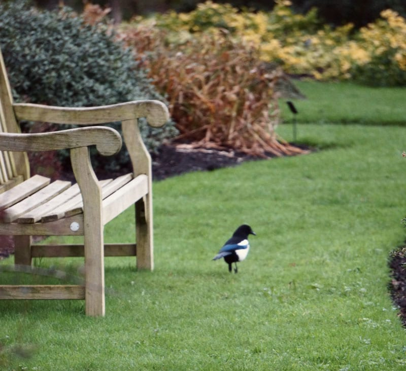 magpie and bench