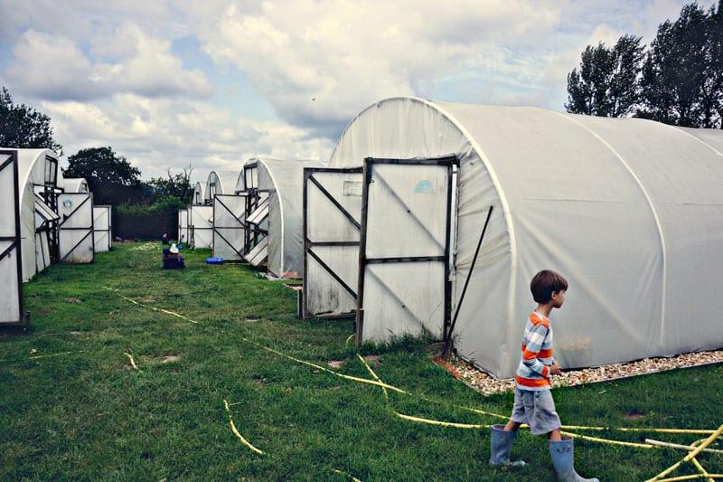 Biodynamic farm polytunnels