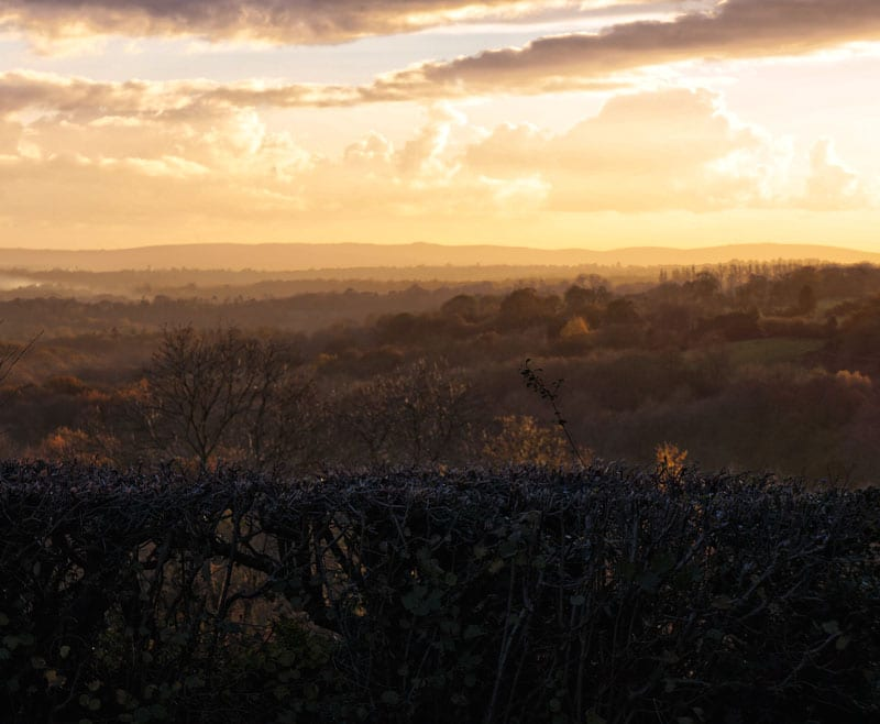 landscape south downs