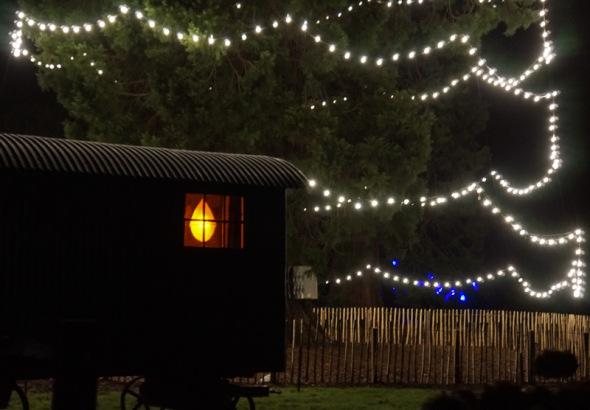 caravan christmas tree Wakehurst
