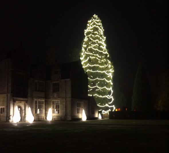 Wakehurst Place Christmas tree