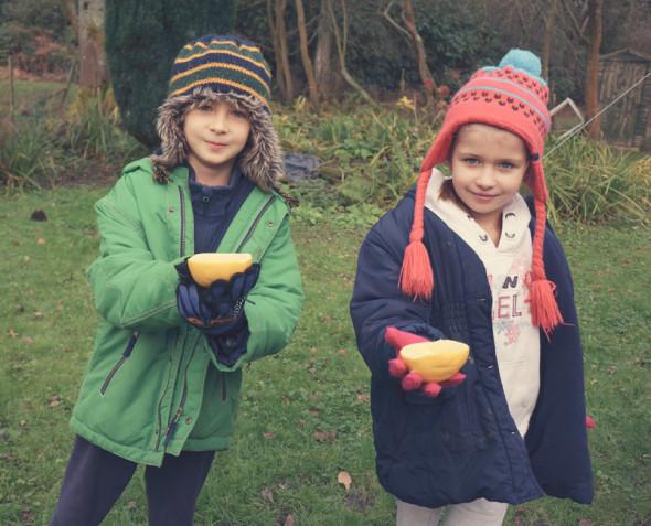 winter grapefruit trap