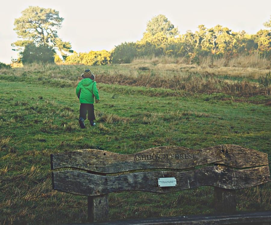 Ashdown Forest Winnie-the-pooh walk