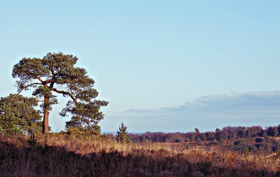 Ashdown Forest Winnie the Pooh style walk