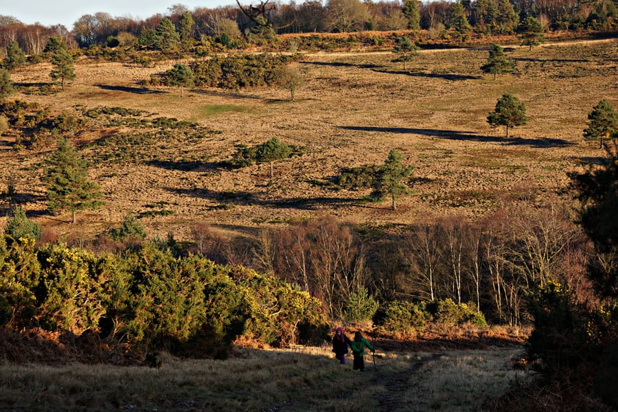 Heading towards North Pole Ashdown Forest