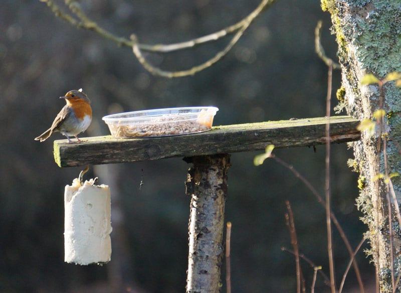 Robin n bird platform