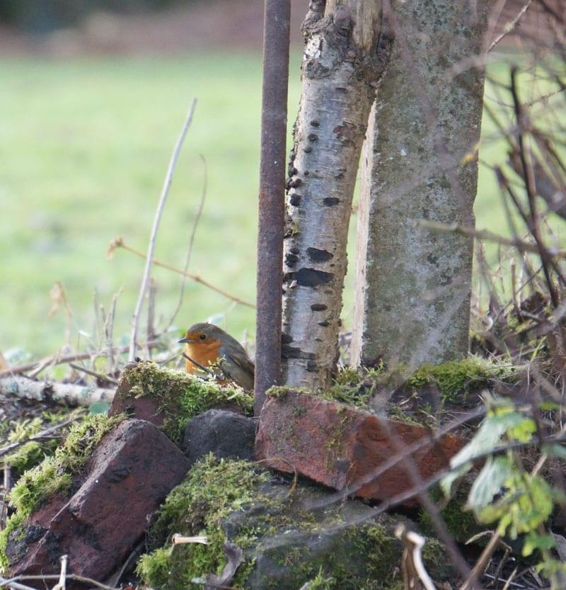 robin inspecting