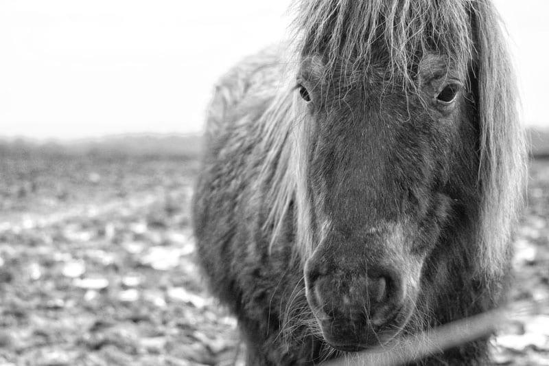 A winter pony – my Sunday photo.