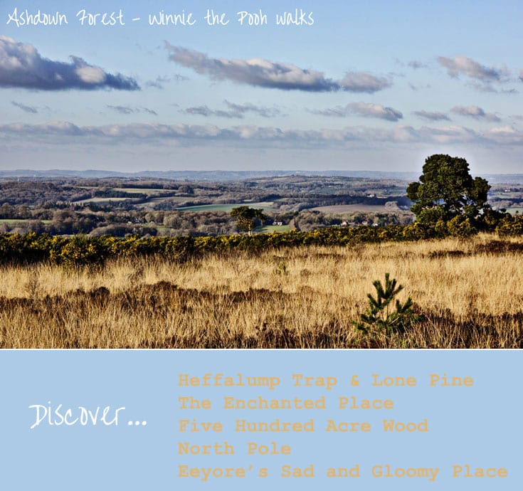 Discover Ashdown Forest Winnie the Pooh walks