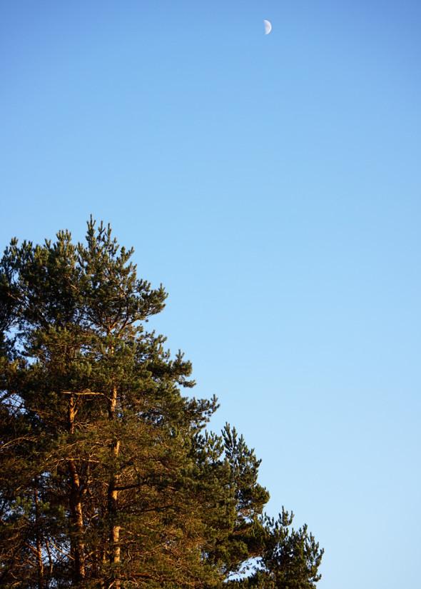 Moon 100 Acres Wood Winnie Pooh