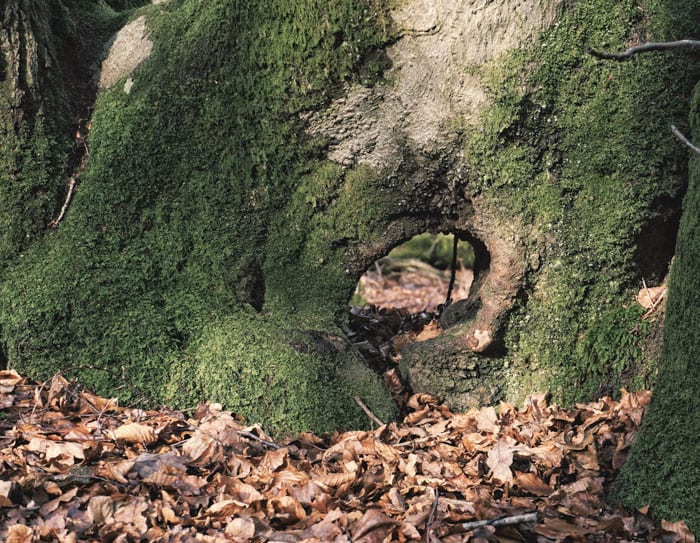 Moss and tunnel at base of tree