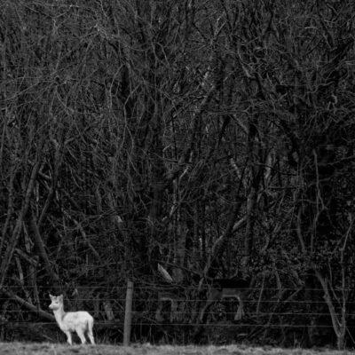 White Deer & Hide and Seek