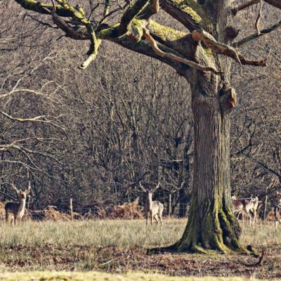 A walk on the wild side in Sussex