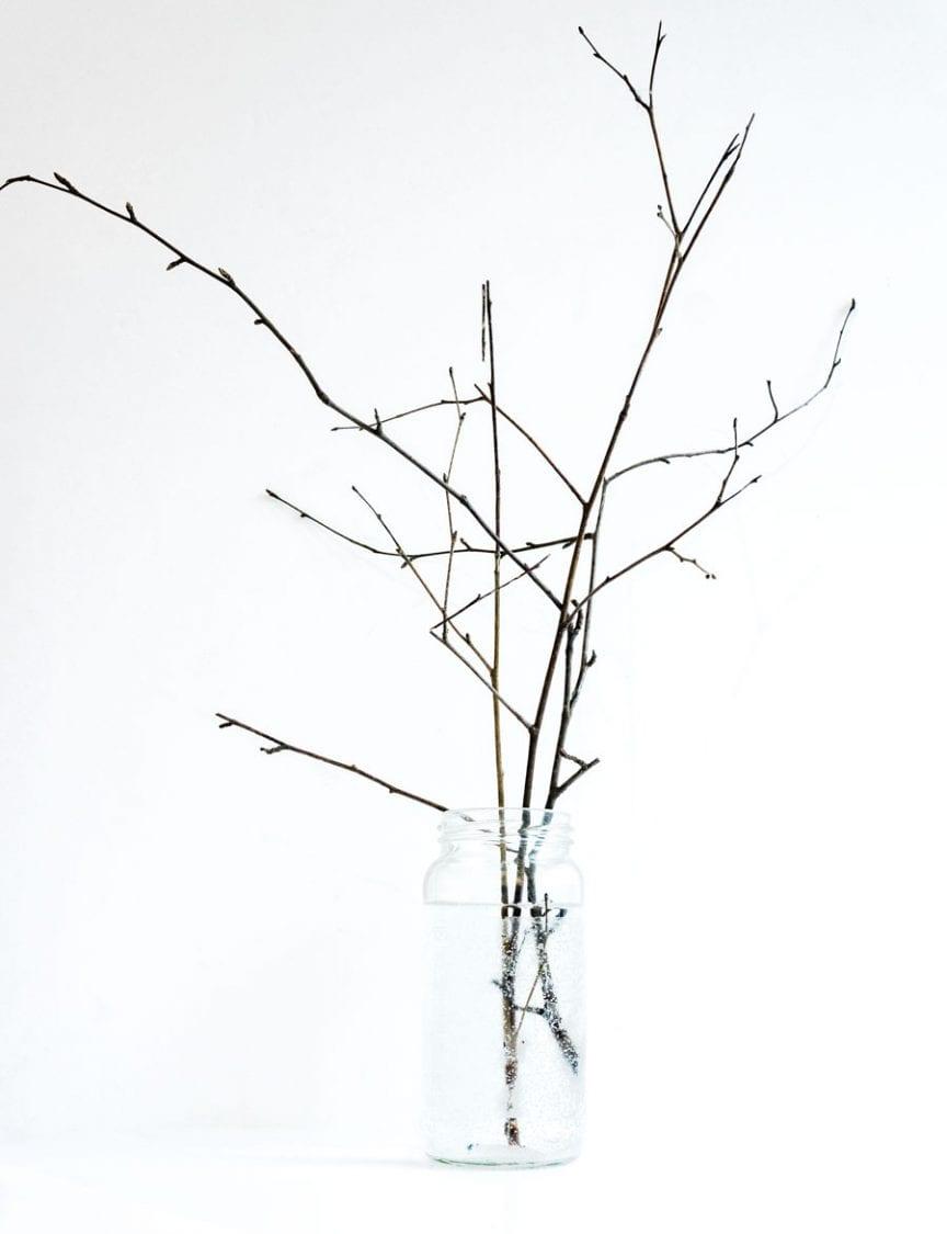 19 Feb Birch twigs with buds