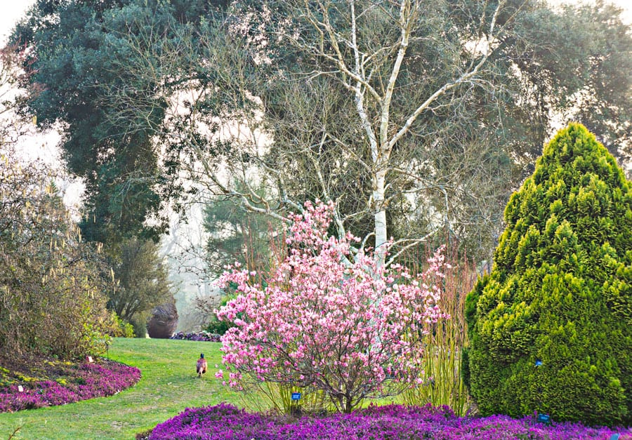 Wakehurst Place garden flowers trees and pheasant