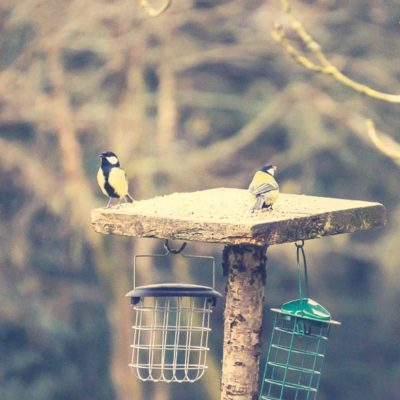 A bird feeder party
