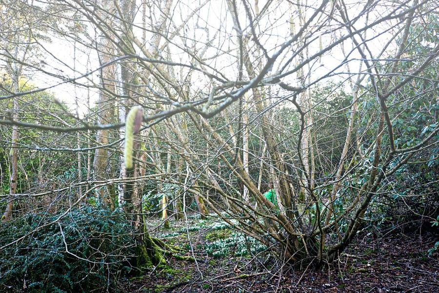 Hazel tree and Theo