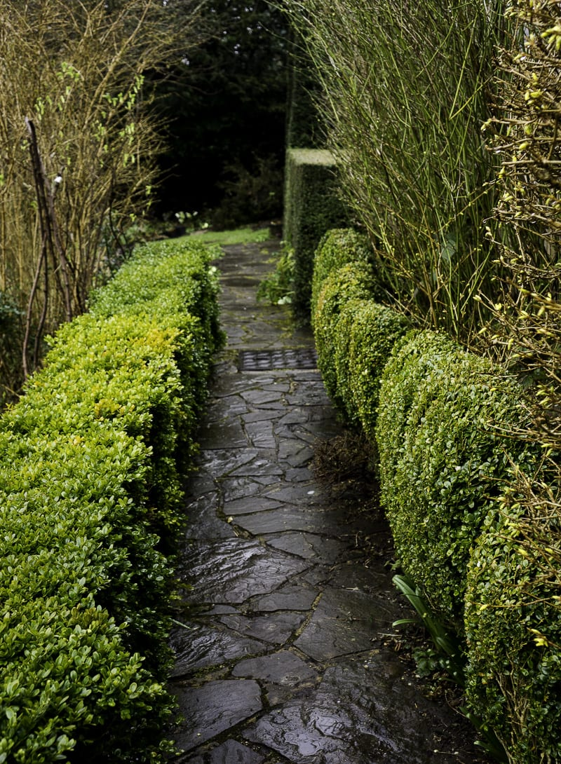 Hedge in The Priest House Garden