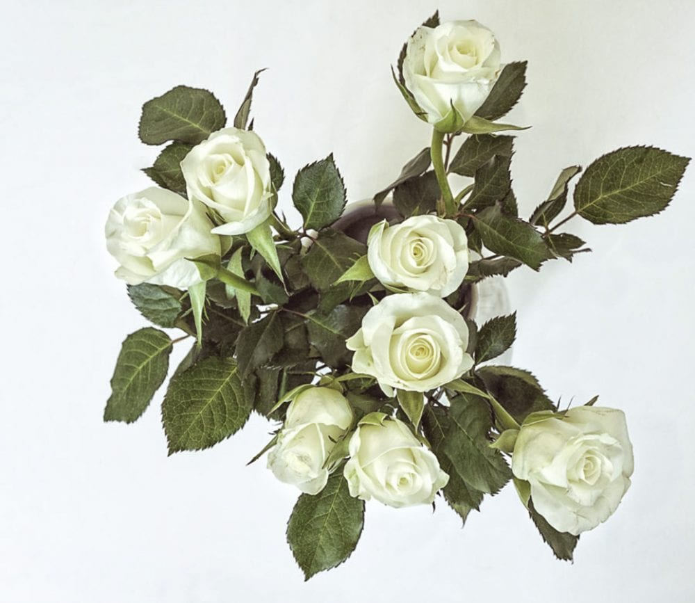White roses above in vase