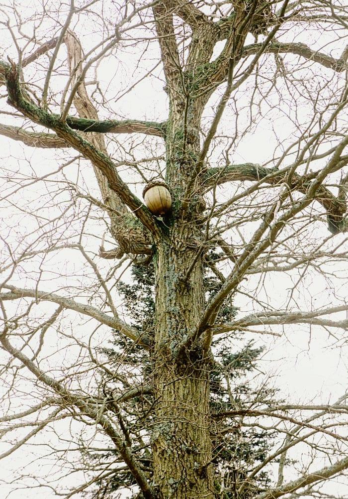 Acorn sculpture in tree